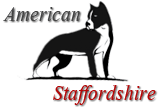 American Staffordshire - Tout savoir sur l'Amstaff
